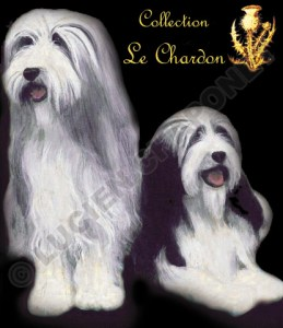 Collection le Chardon cartes postales de race de chien écossais, spécial Bearded Collie