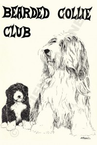 BCC Bearded Collie Club, Association année 80. Couverture dessin  de Lucien Chaponet illustrant un chiot et un adulte barbu